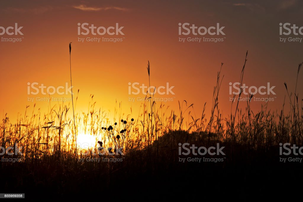 Sunset State Park - Royalty-free Grass Stock Photo