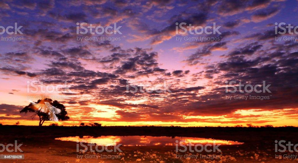 Sunset sunrise African cloudscape landscape reflection Okaukuejo waterhole savannah wilderness stock photo