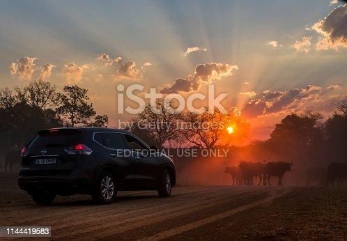 istock Sunset sunrise Kruger National Park Sightseeing Safari Buffalo Herd 1144419583