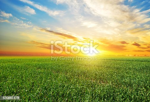 istock Sunset, sunrise, sun over rural countryside wheat field 520881478