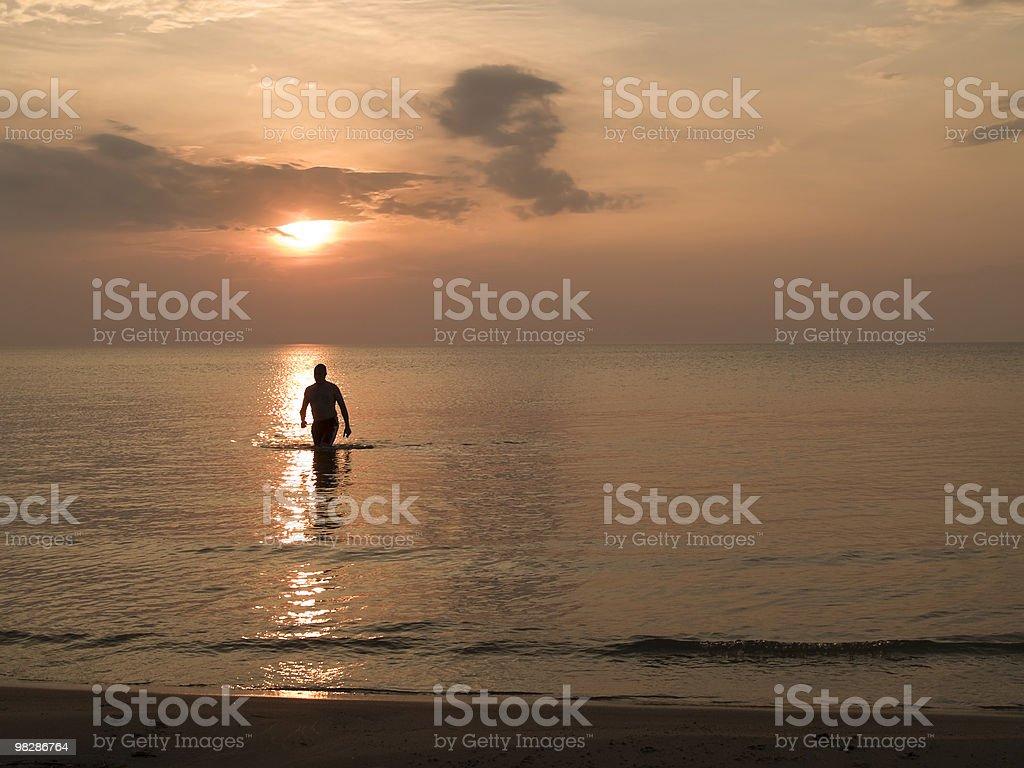 Sunset Swim royalty-free stock photo