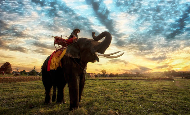 sonnenuntergang landschaft thai - elefanten umriss stock-fotos und bilder
