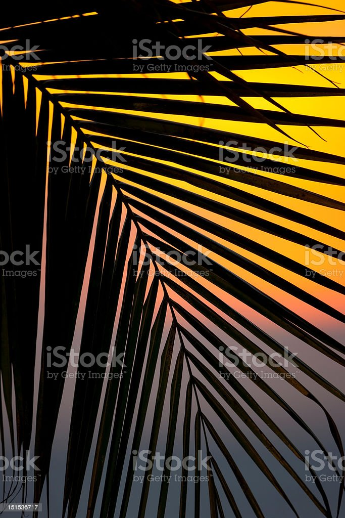 Sunset through a palm tree frond stock photo