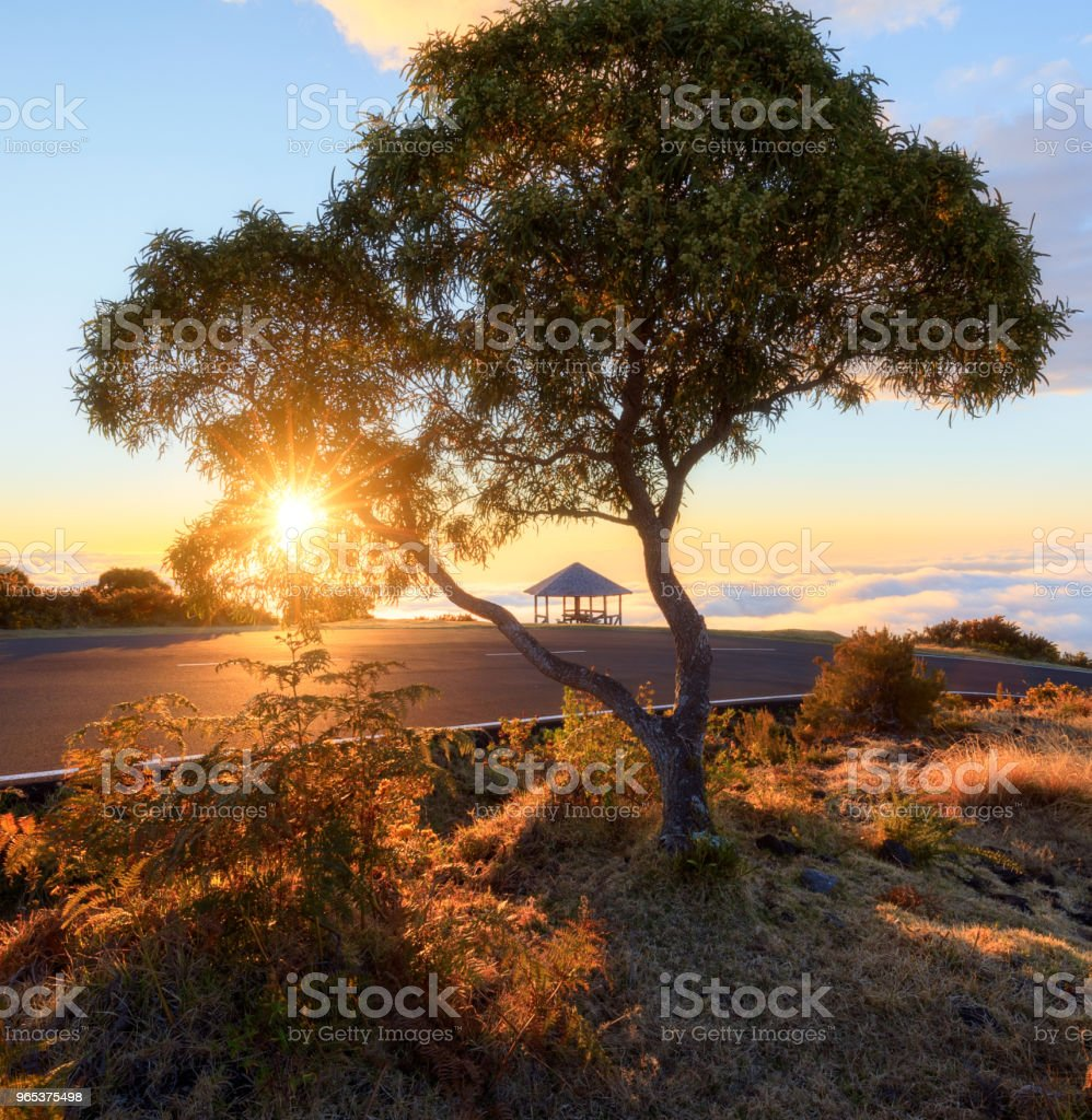 Sunset through a tree at Maido in Saint-Paul, Reunion Island royalty-free stock photo