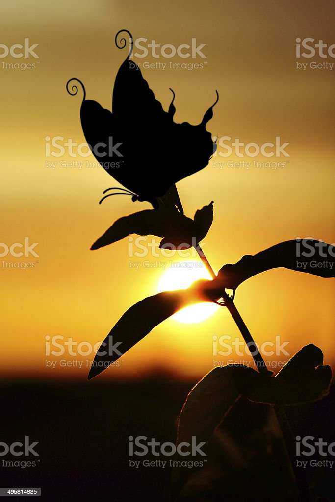 Sunset through branche Honeysuckle leaf with butterfly royalty-free stock photo
