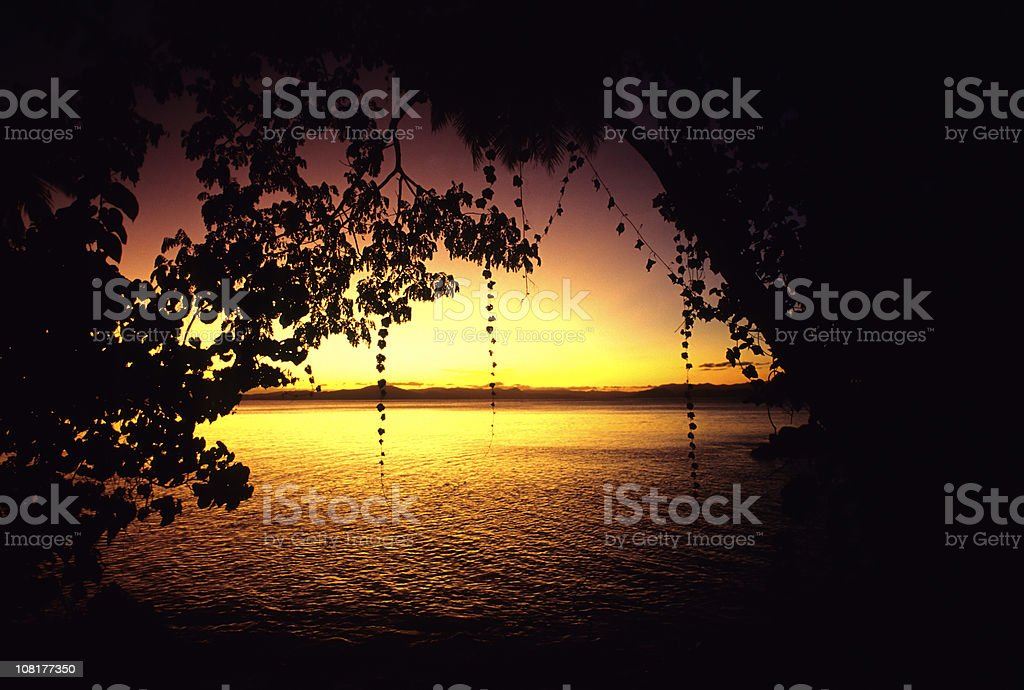 Sunset Through Cave Of Trees royalty-free stock photo