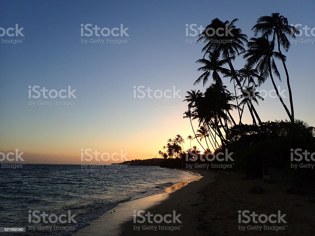 Sunset through Coconut Trees line Kahala Beach stock photo