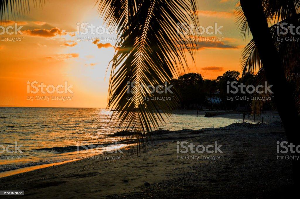 Sunset Through Palm Tree On The Beach stock photo