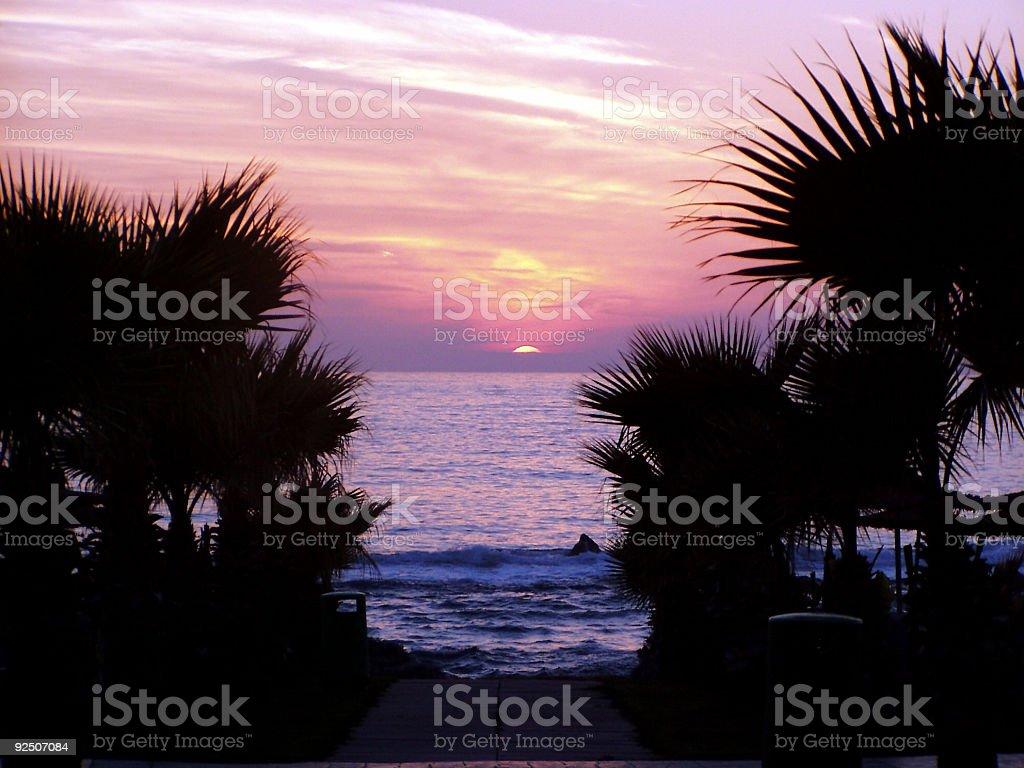 Sunset through palm trees royalty-free stock photo
