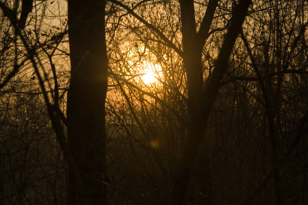 Sunset through silhouetted trees stock photo