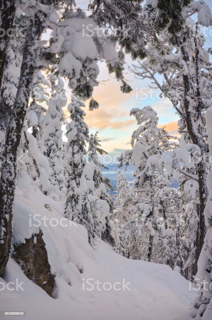 Sunset through snow covered trees in winter - Royalty-free Blue Stock Photo