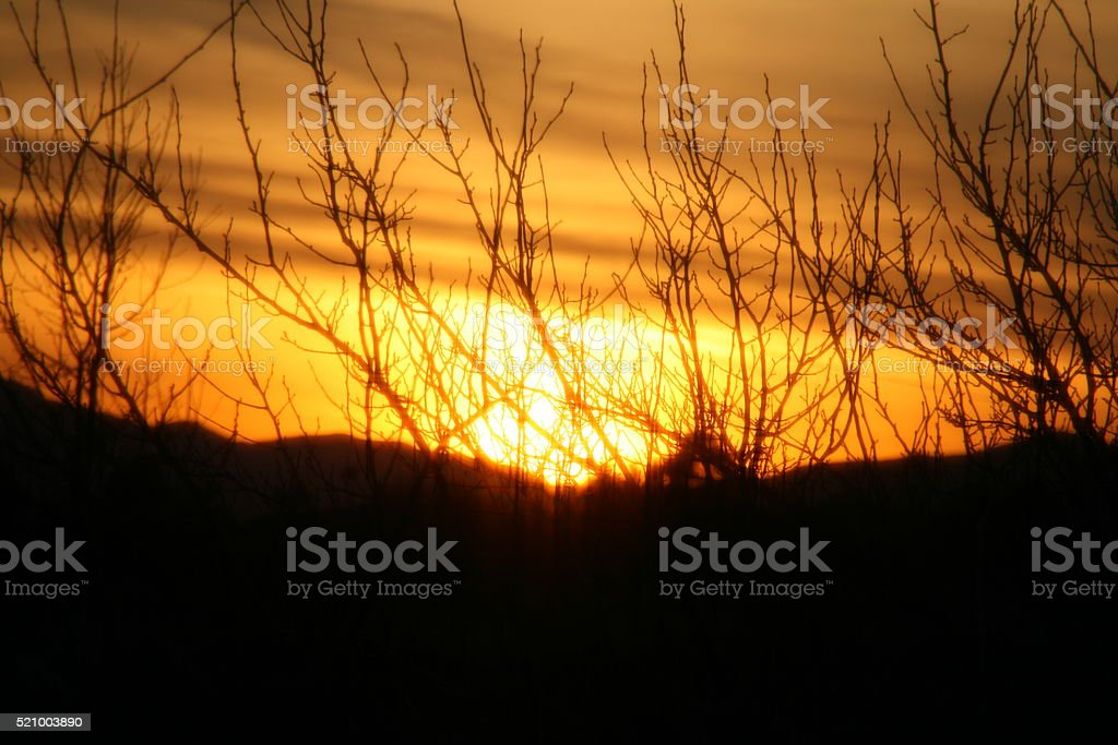 Sunset Through the Branches stock photo
