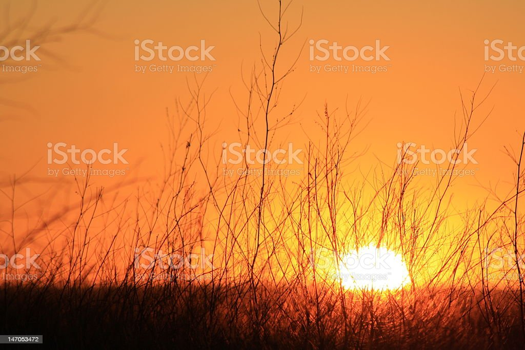 Sunset Through the Grass royalty-free stock photo