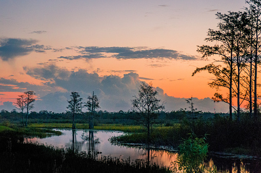 istock sunset through the trees of the swamps 878543376