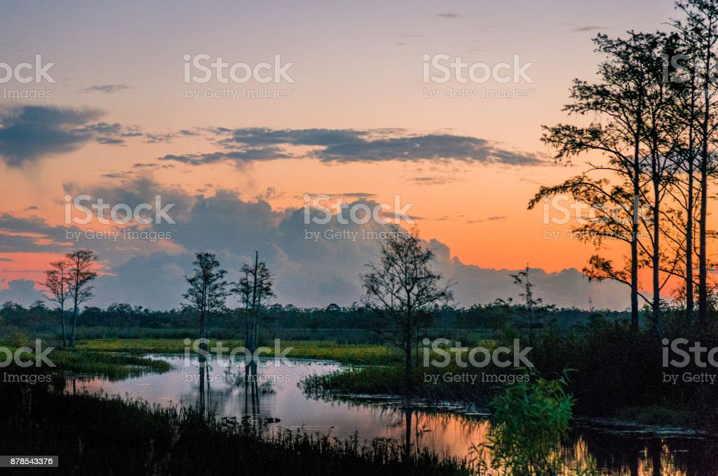 sunset through the trees of the swamps stock photo