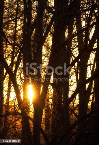 istock Sunset Through the Trees 1140418493