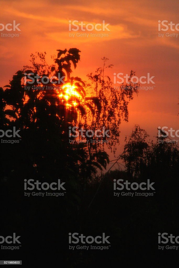 Sunset Through the Trees stock photo