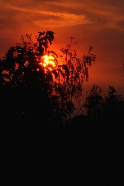 Sunset Through the Trees stock photo