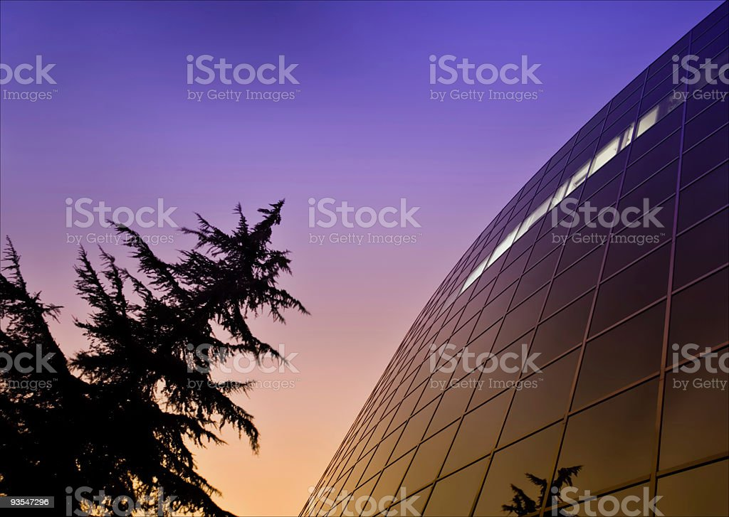 Sunset tree and business building royalty-free stock photo