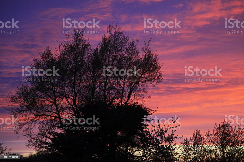 Sunset Tree royalty-free stock photo