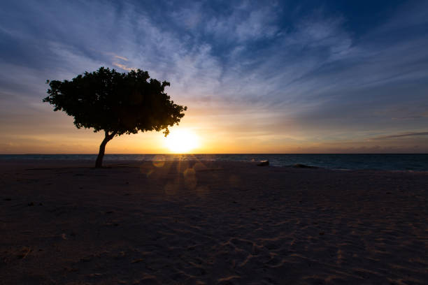 Sunset Tree Silhouette stock photo