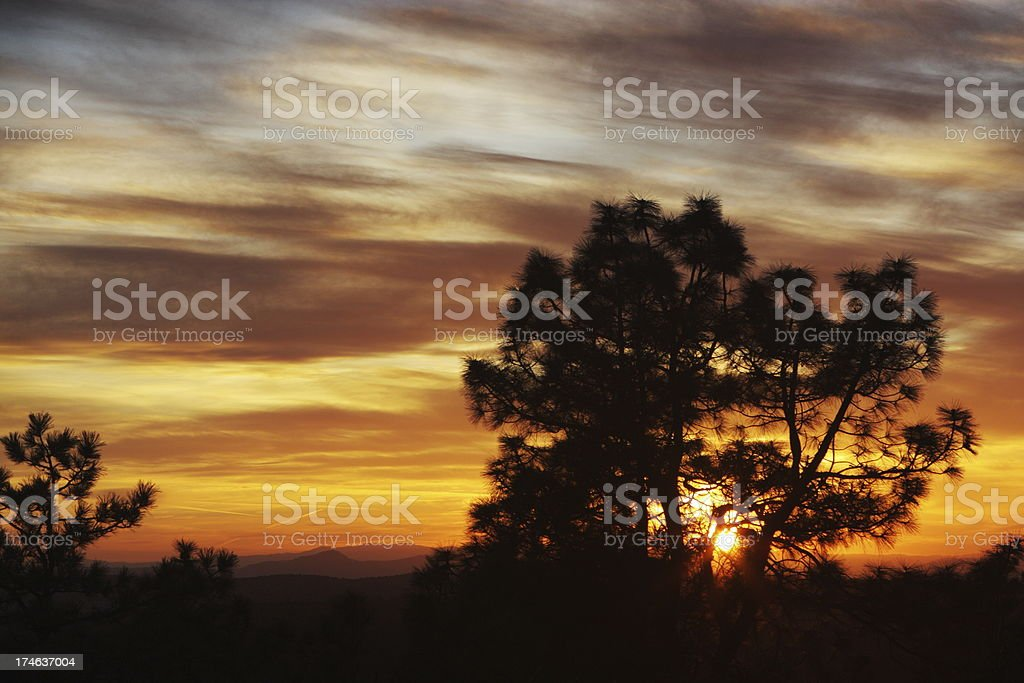 Sunset Tree Silhouette Romantic Sky royalty-free stock photo