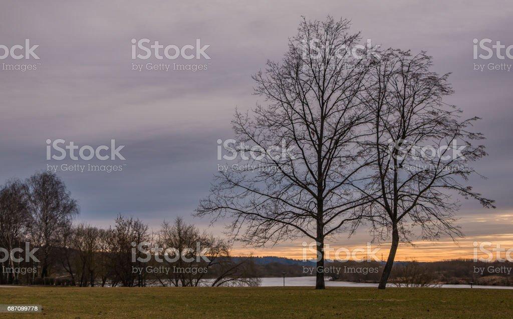 Sonnenuntergang mit Palmen Lizenzfreies stock-foto