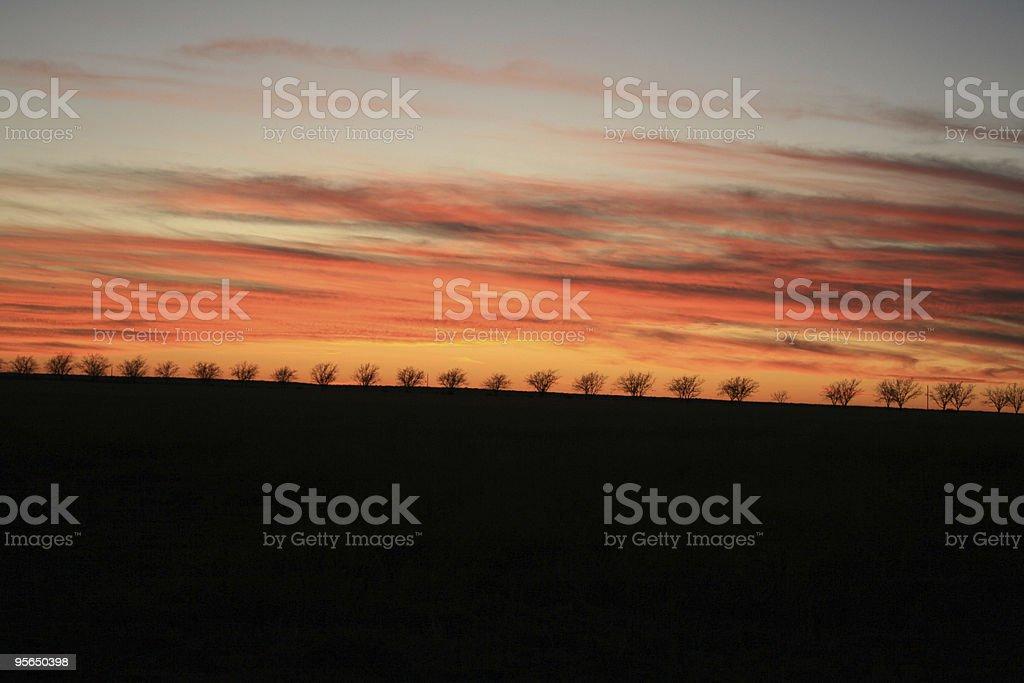 Sonnenuntergang mit Palmen - Lizenzfrei Baum Stock-Foto