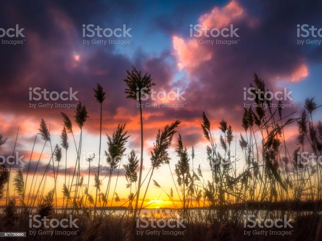 Solnedgången tråg reed gräs bildbanksfoto