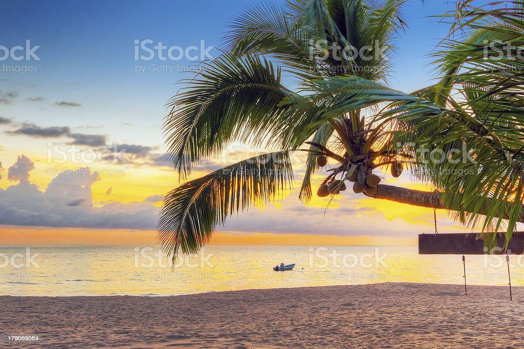 Sunset under tropical palm tree in Thailand stock photo