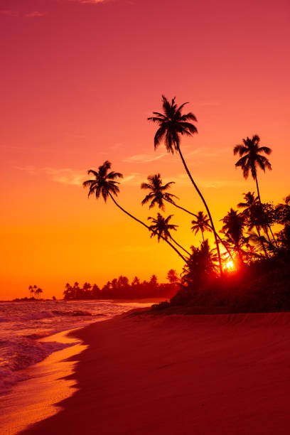 Sunset upon sandy beach