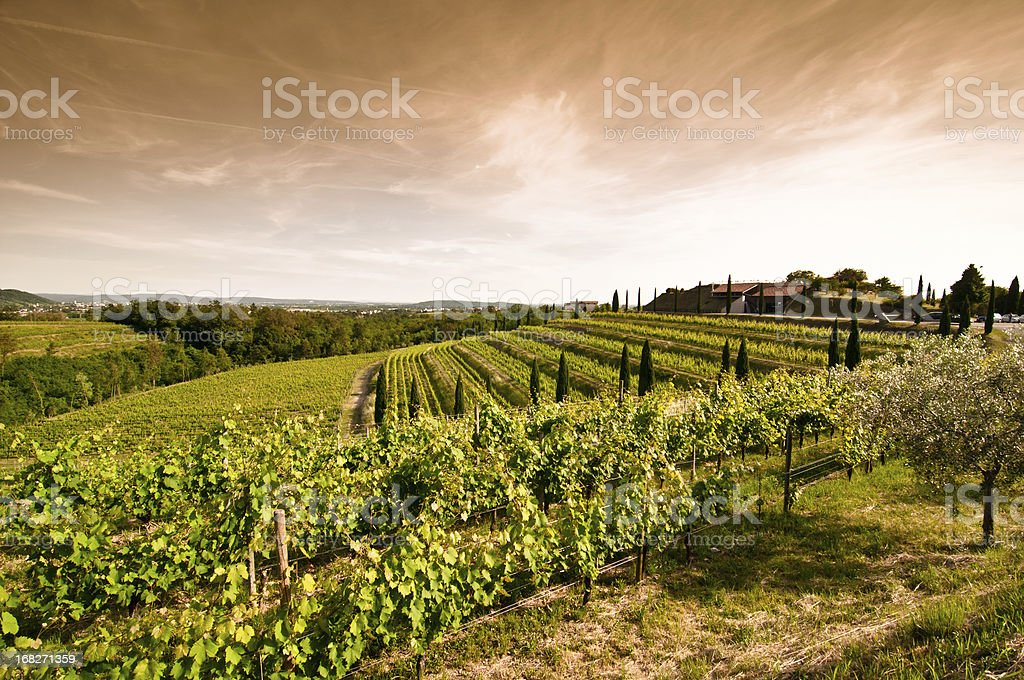 A sunset view of a vineyard in North Italy stock photo