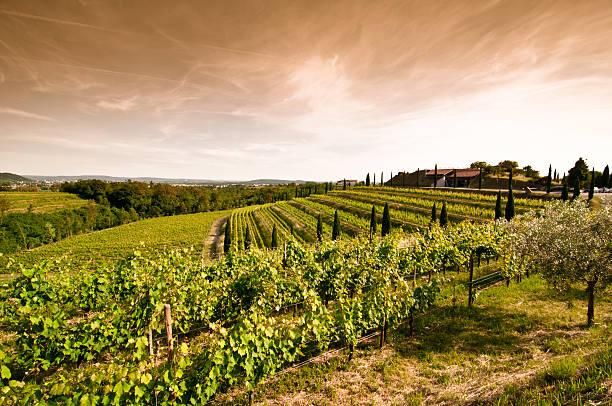 blick auf den sonnenuntergang über weinberg-landschaft im norden italiens - friaul julisch venetien stock-fotos und bilder