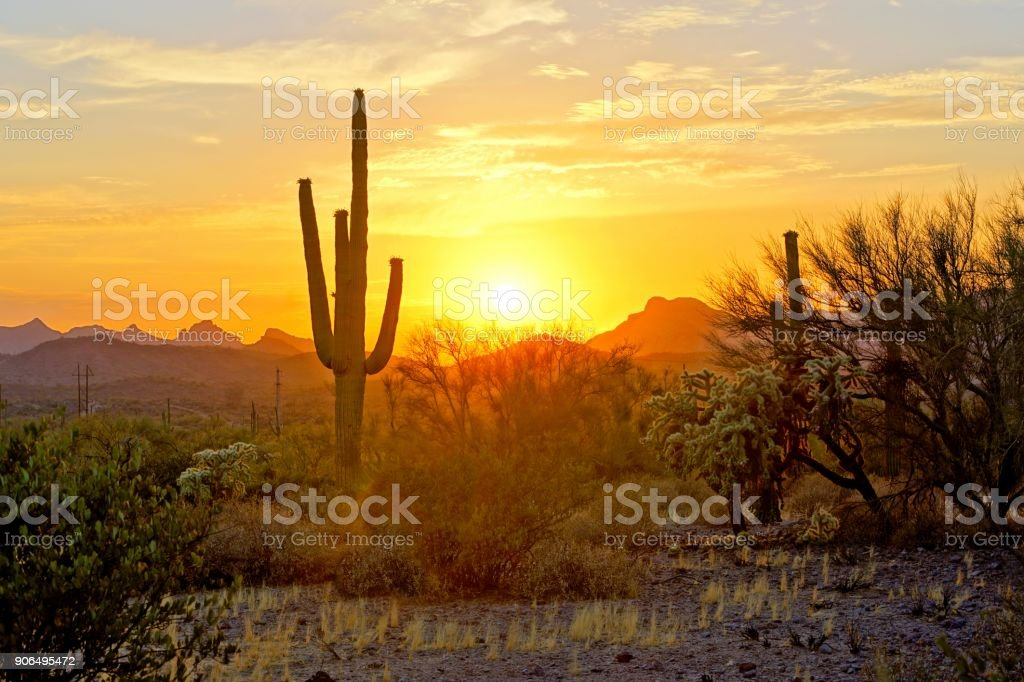 Sunset view of the Arizona desert with cacti stock photo