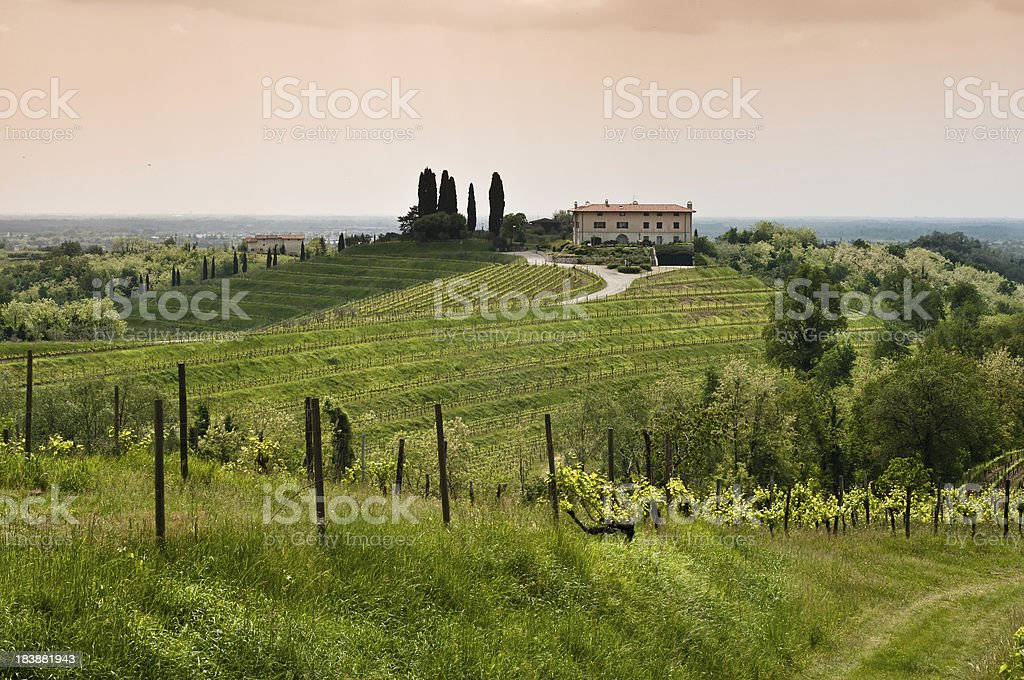 Sunset view over vineyard landscape in north of Italy stock photo
