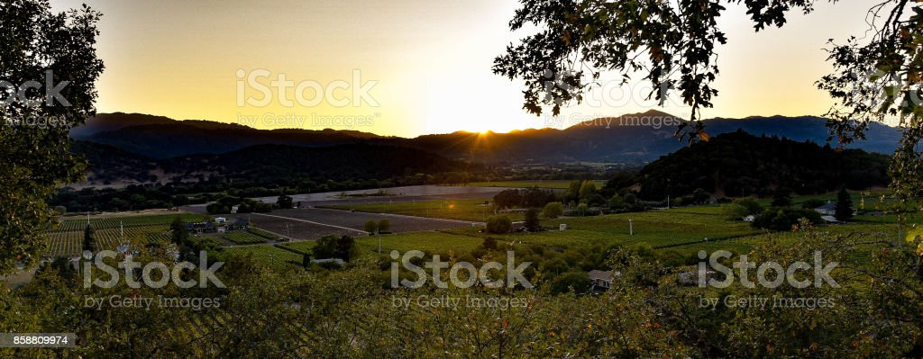 Sunset Vineyard stock photo