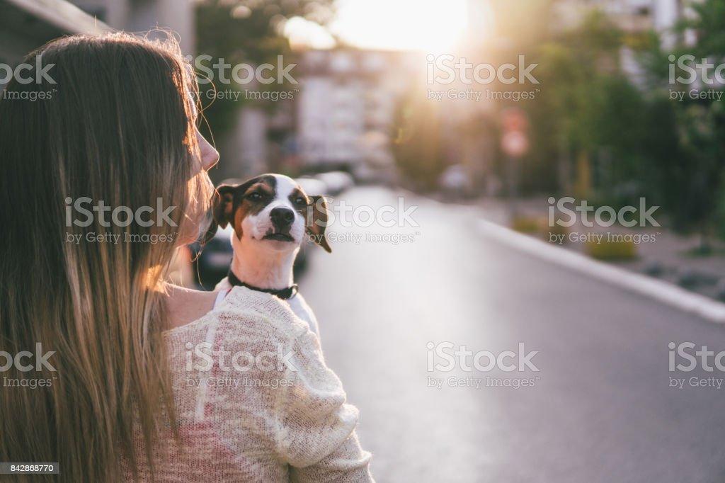 Sunset walks with my dog stock photo