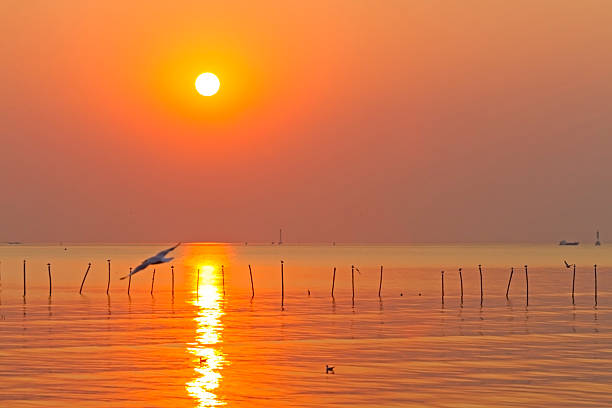 Sunset water golden picture id491748834?b=1&k=6&m=491748834&s=612x612&w=0&h=xfrulhrsw6p4lhzmrls6uk0 m3phu2voiitgcpggbg0=