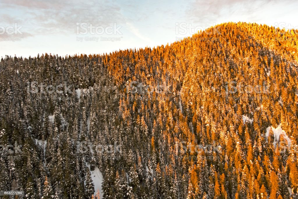 Sunset Winter Forest Snow Covered Trees Shadow and Sun stock photo