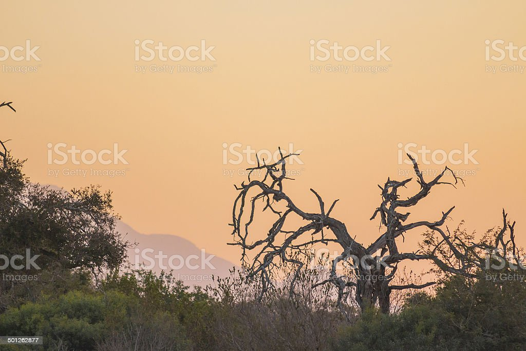 Sunset with a dead tree in the foreground stock photo