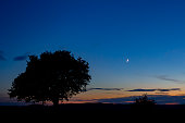 Sunset with a silhouette of a tree and the moon