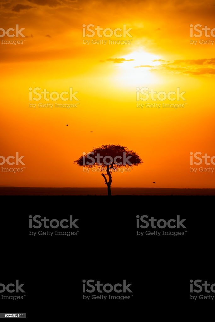 Sunset with a single tree in silhouette stock photo