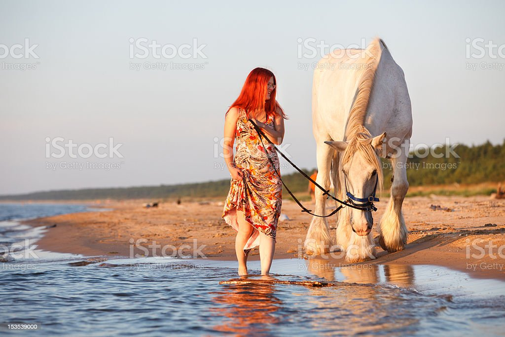 Sunset with horse at the beach stock photo