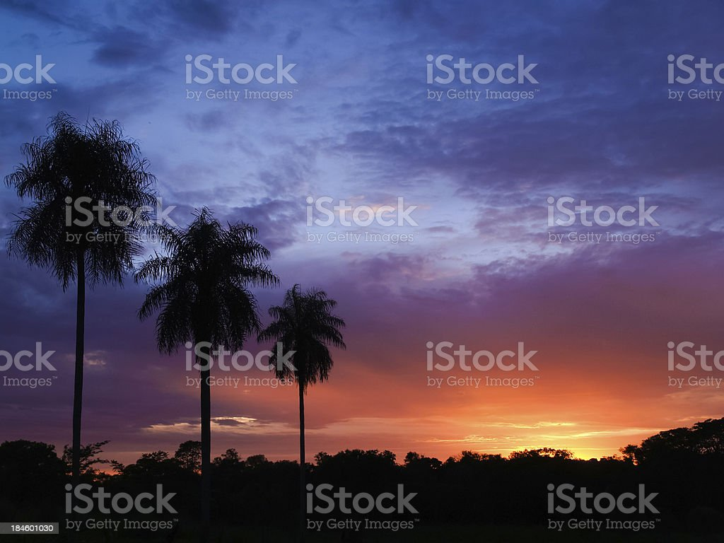 sunset with palm trees in Paraguay stock photo