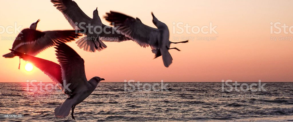 Sunset with Seagulls Silhouette stock photo
