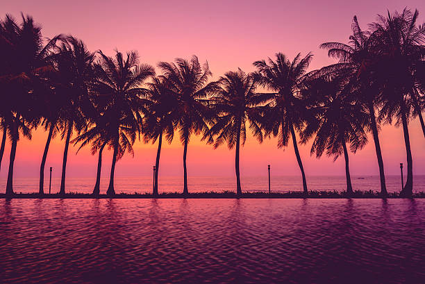 Sonnenuntergang Kontur mit Palmen, pastellfarbene Stil – Foto