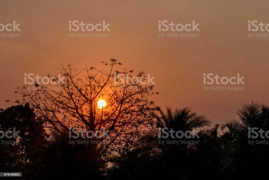 Sunset with sun inside the tree stock photo