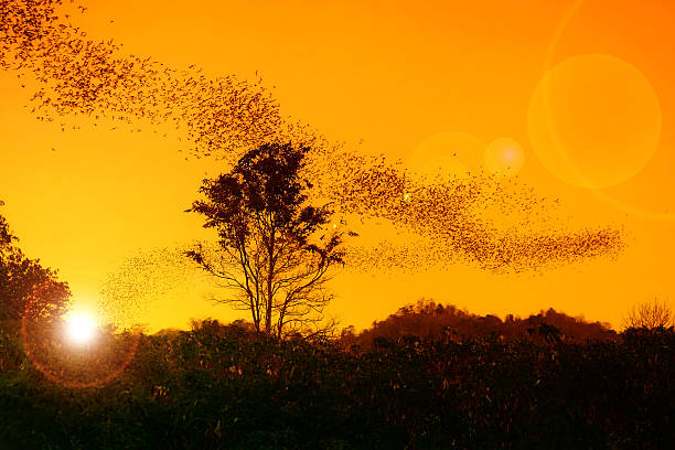 Sunset with swarm of bats stock photo