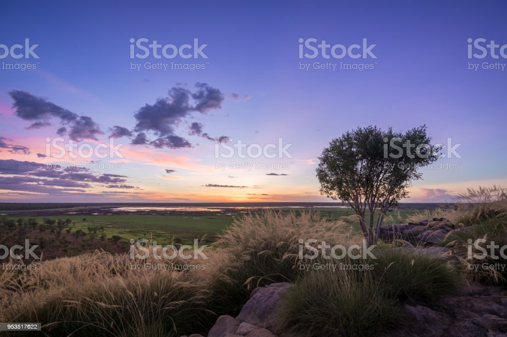 Sunset with tree and grass over plain stock photo