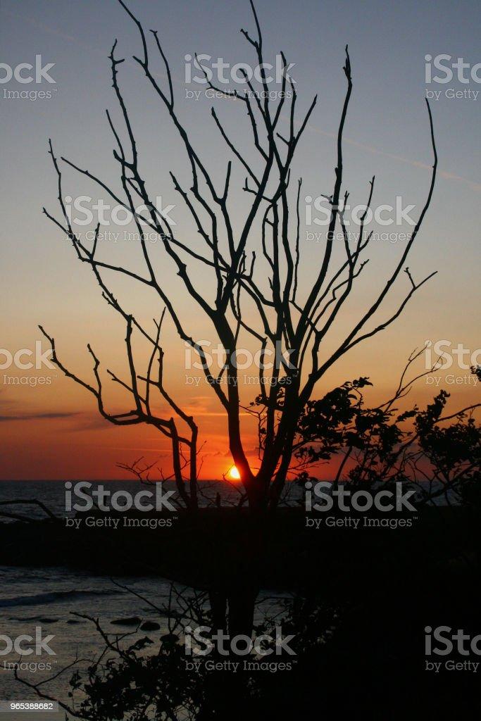 Sunset with tree in silouhette zbiór zdjęć royalty-free
